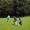 Spielszene Inter Türkspor gegen SV Friedrichsort